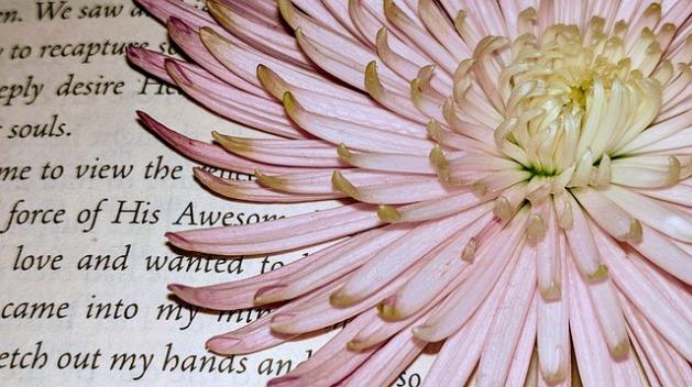 Página de libro, poesía y flor