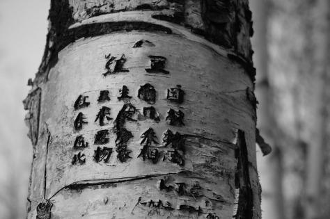 Poesía japonesa grabada en un árbol